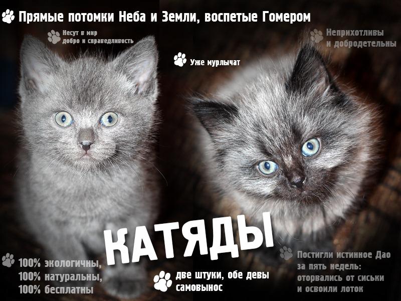стихи пиар котят готово обеспечить