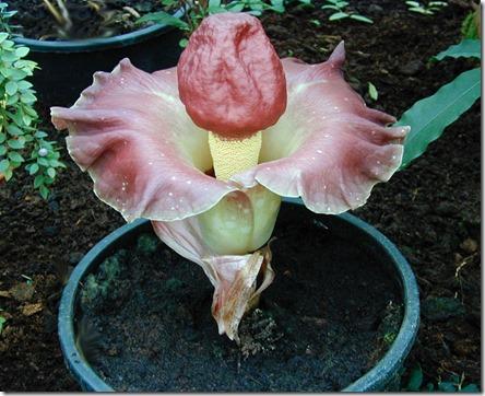 147147,xcitefun-strange-plants-3