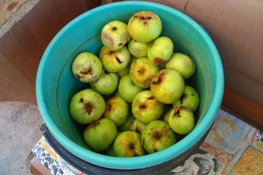 В основном из яблок…