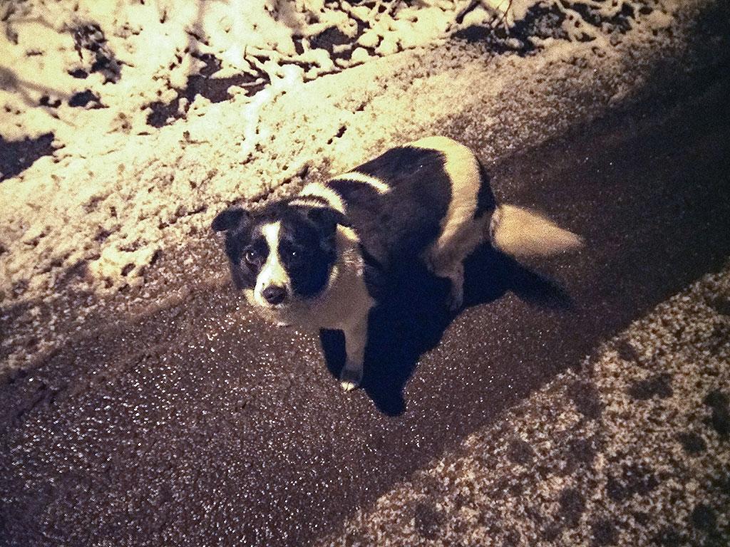 Собака-на-заборе и сосискотерапия. 1