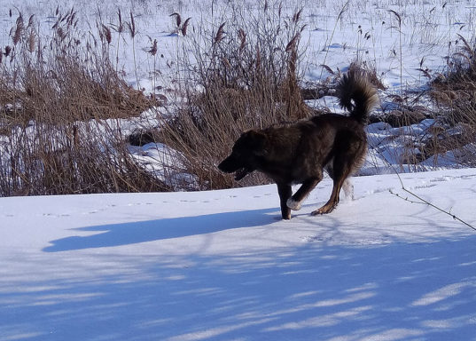 Собака-поскакака