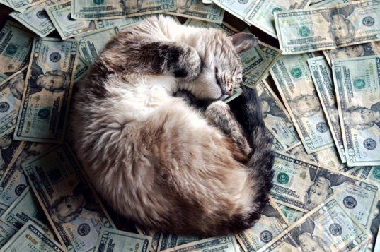 Бросить все и жить с котом 1