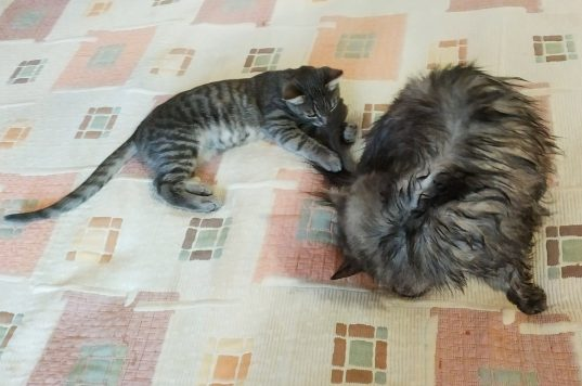 О пользе мытья котов 4