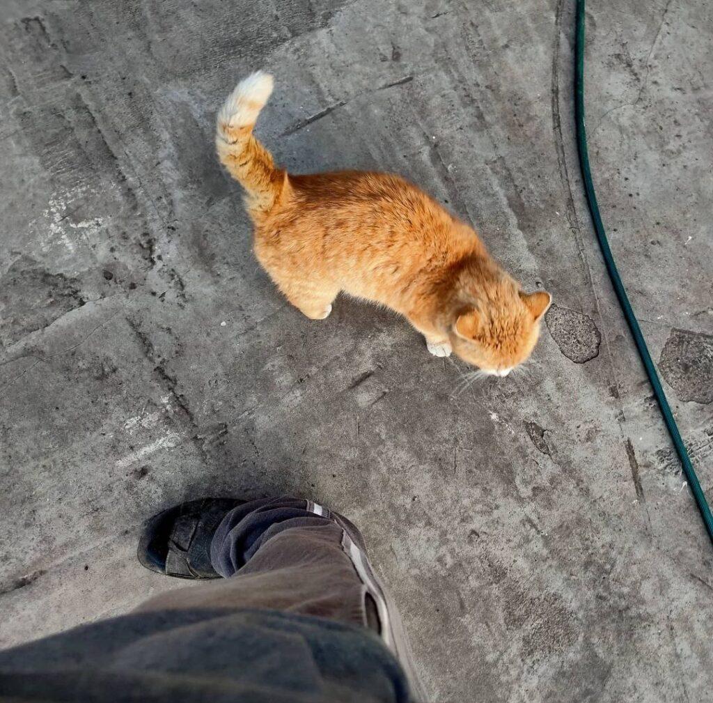 Бесконтактный кот