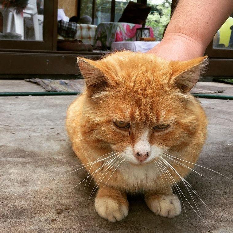 Кот и третий закон Ньютона