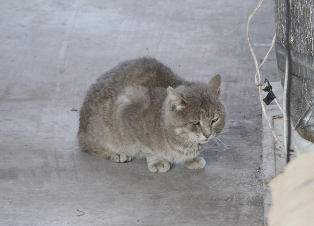 Котское поведение
