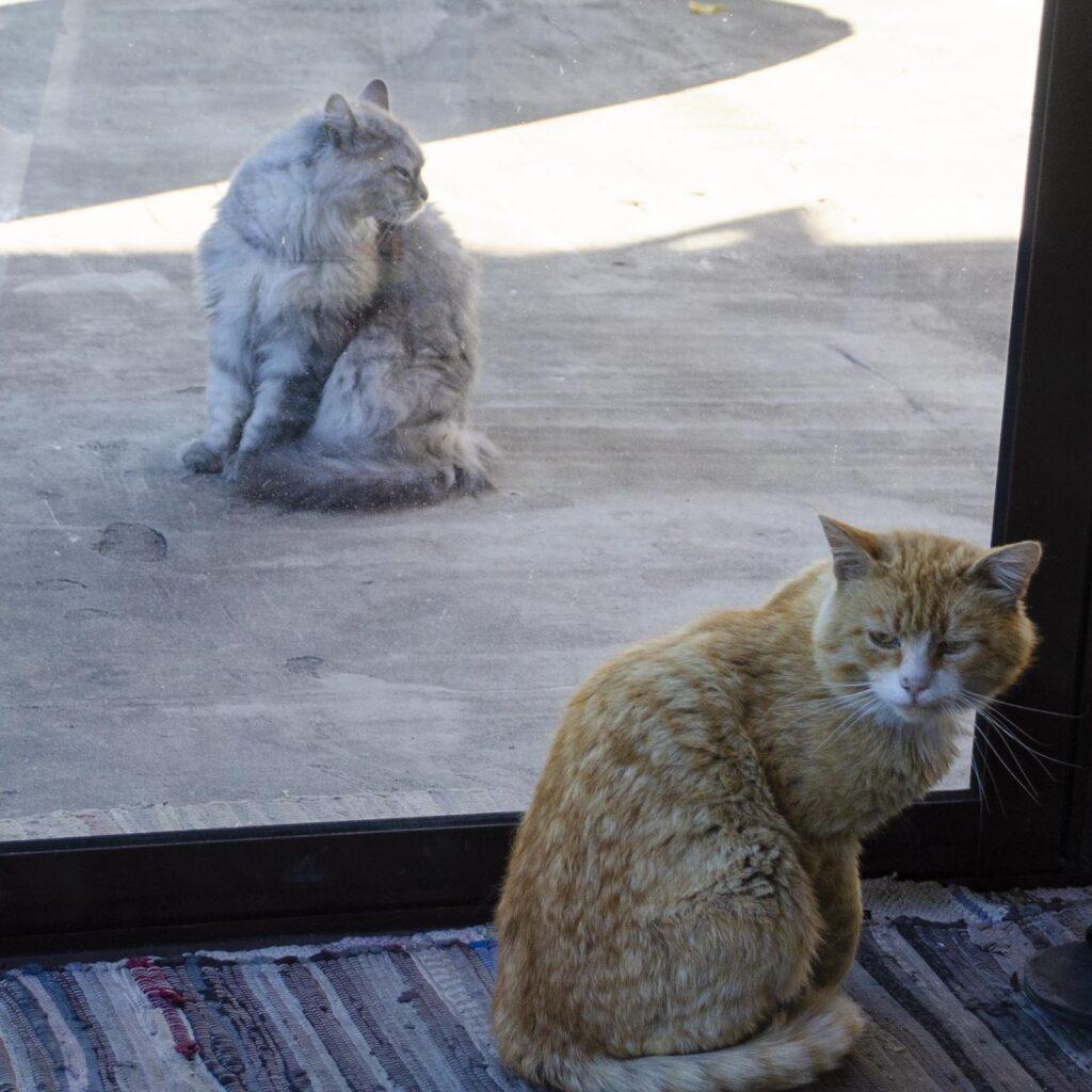 Зеркальные диспозиции