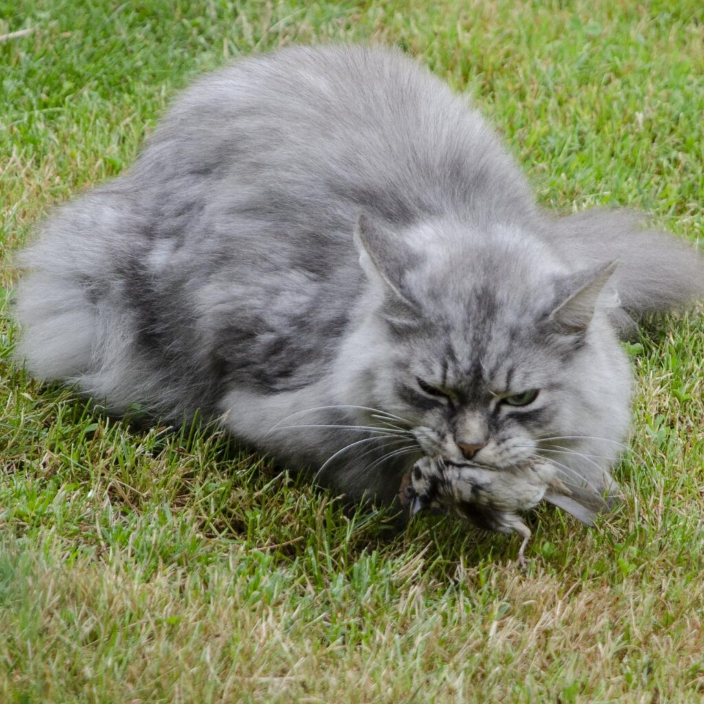 День ПВО, или «Кот, достань воробушка!»